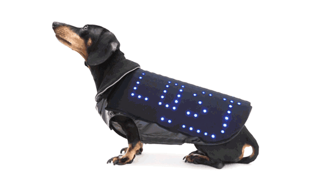 Disco_Dog_Lost_dog