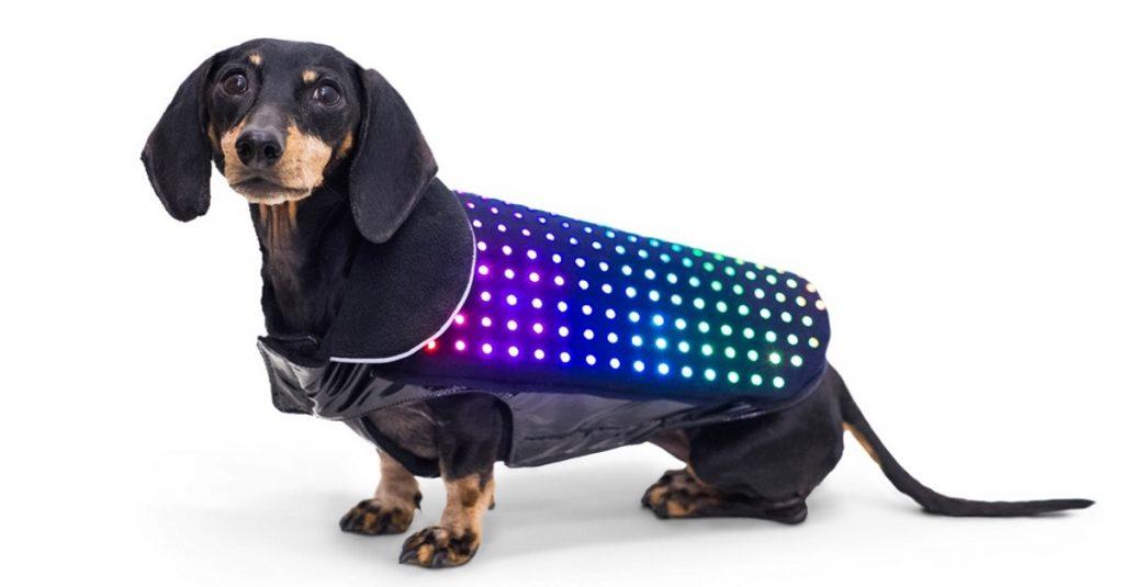 Disco Dog: Fernsteuerbare LED-Hundeweste lässt Vierbeiner leuchten