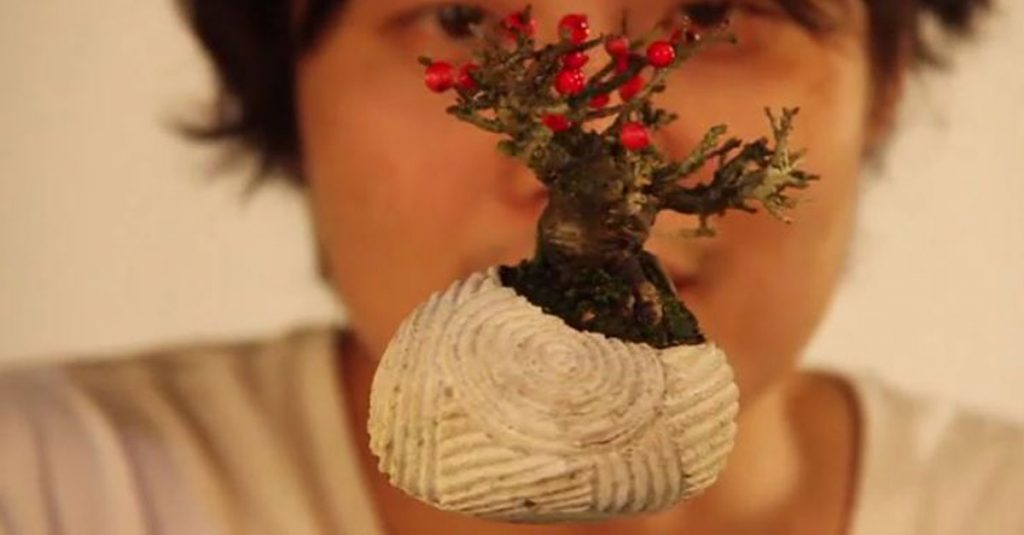 Kleiner Stern: Ein Bonsai hebt ab