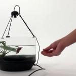 Kampffisch steuert selbstständig sein fahrendes Aquarium