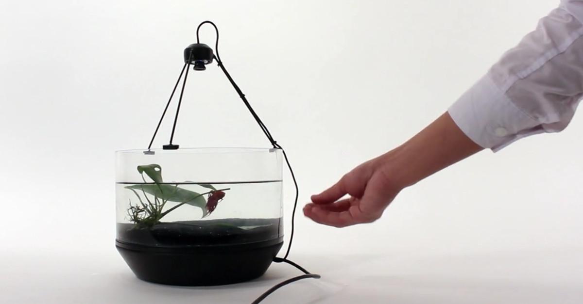 Kampffisch steuert selbstst ndig sein fahrendes aquarium for Kampffisch aquarium