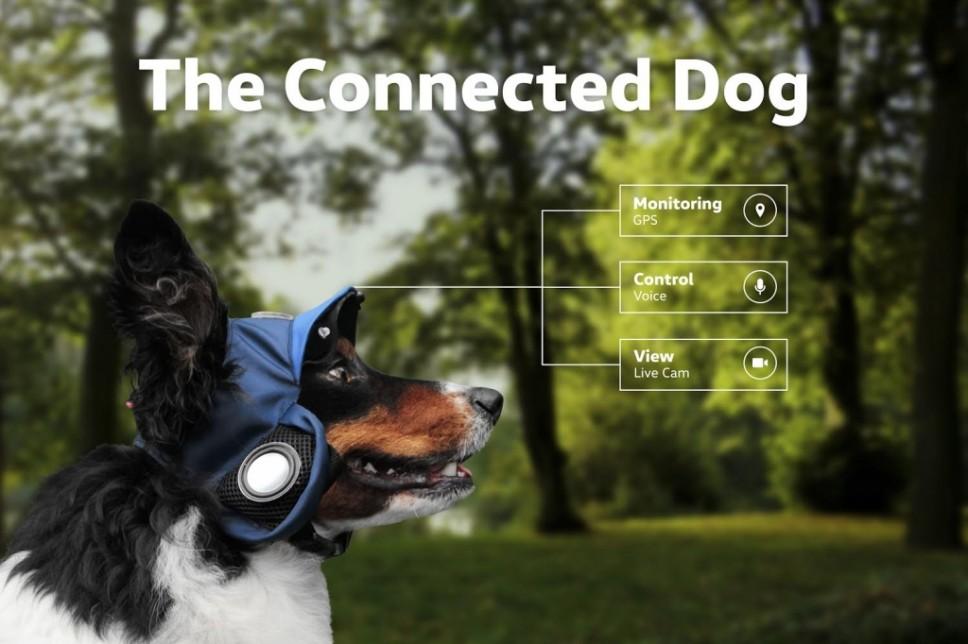VW Connected Dog: Der Hund geht selbst Gassi